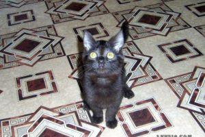 котенок Мишка подрастает
