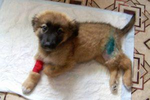 Право на Жизнь. У щенка недостаток кальция.