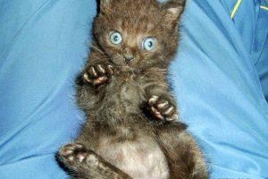 котенок Мишка