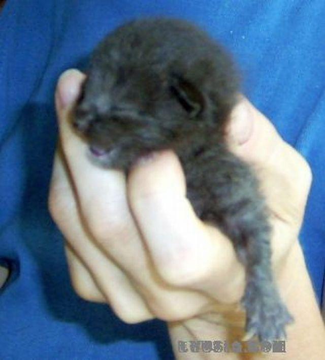 крошечный котенок Мишка