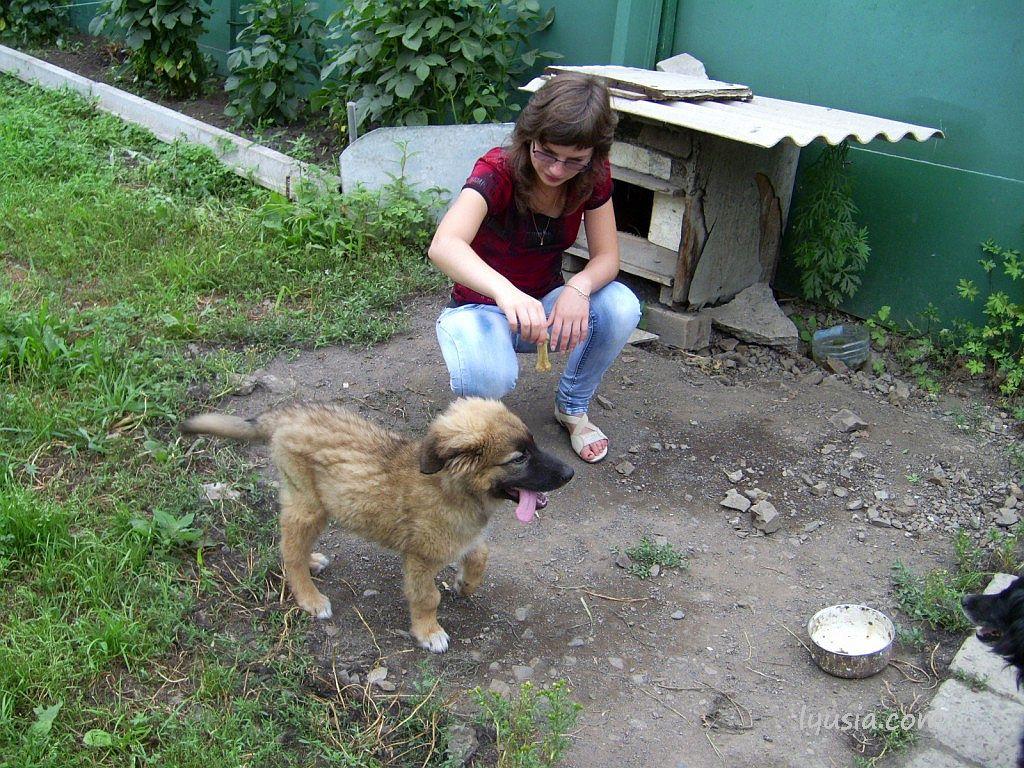 Как восполнить недостаток кальция у щенка. Наташа и Феникс