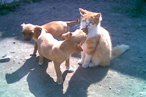Милые животные, фото. А поцеловать!