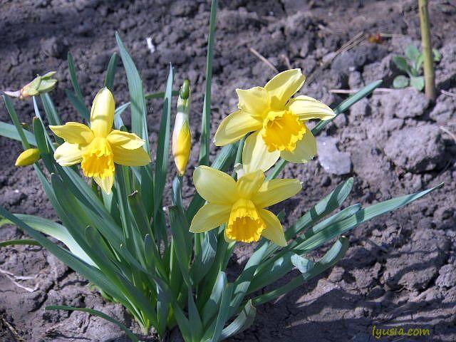 Первые весенние цветы признаки весны