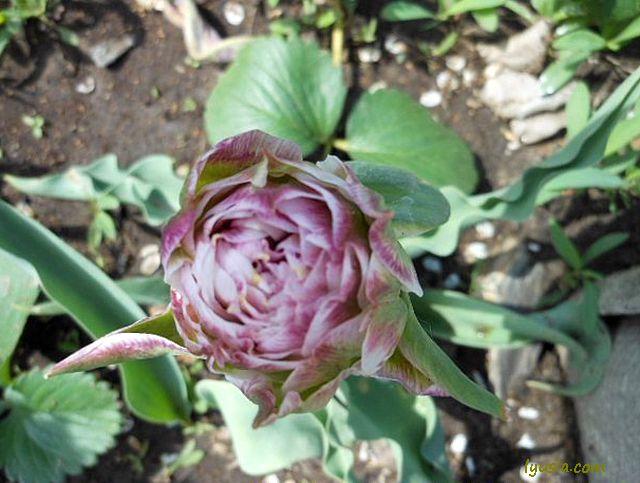 Первые весенние цветы, фото весны