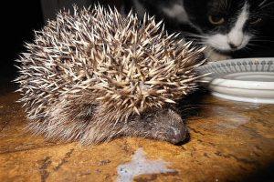 Милые животные, фото. Ежик и Мася