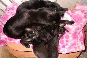 Милые животные, фото. Багир, Муська, Мишка и Масянька