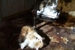Милые животные, фото. Мурчик и Лёва