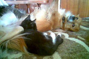 Милые животные, фото. Клепа и Масянька