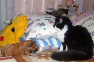 Милые животные, фото. Дафна и Жора
