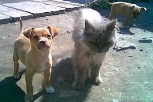 Милые животные, фото