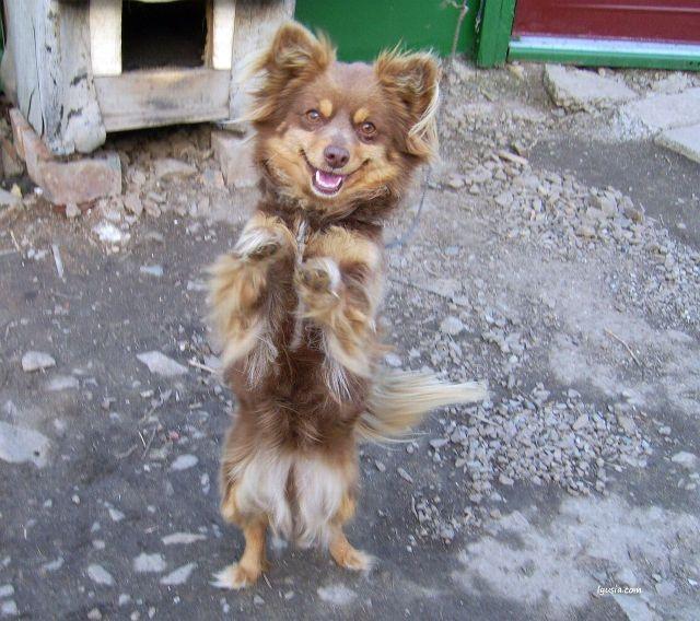 Человек собаке друг? Милые животные, фото. Маня