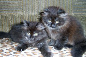 Милые животные, фото. Муська и Зайка