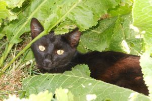 Черный кот, фото дня.