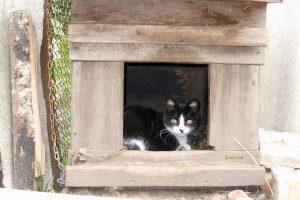 Кот ученый фото