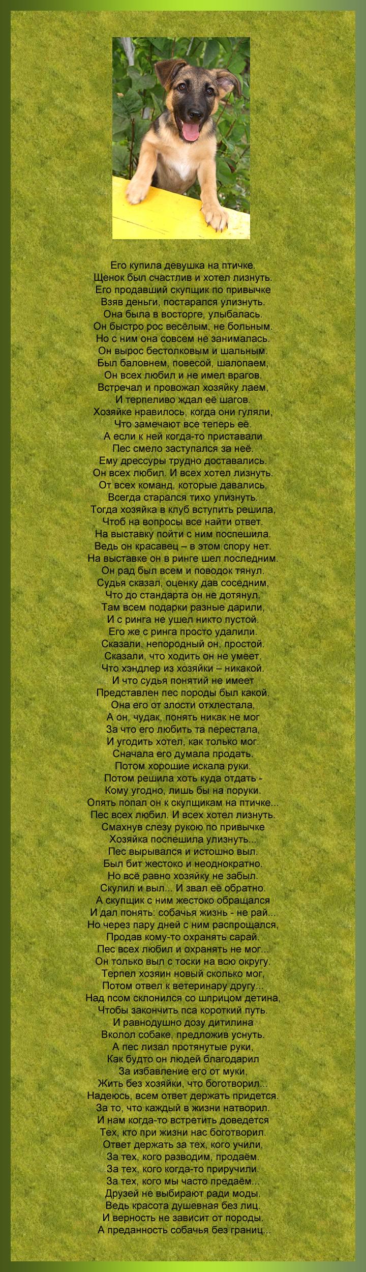 Стихи о предательстве людей по отношению к собаке