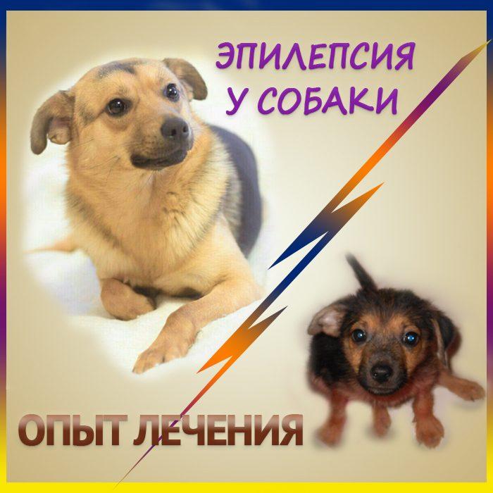 Эпилепсия у собаки. Опыт лечения.